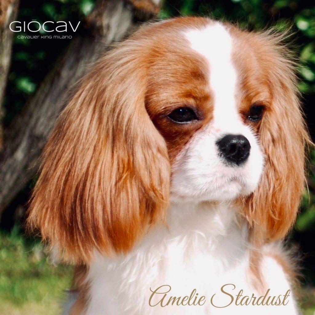 AMELIE-GIOCAV
