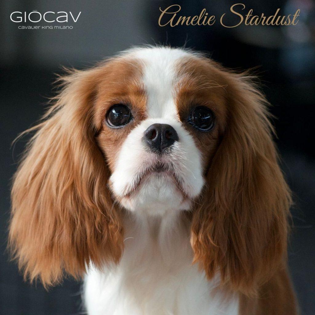 AMELIE-CAVGIO