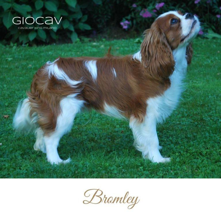 bromley-cavalier-king-boys