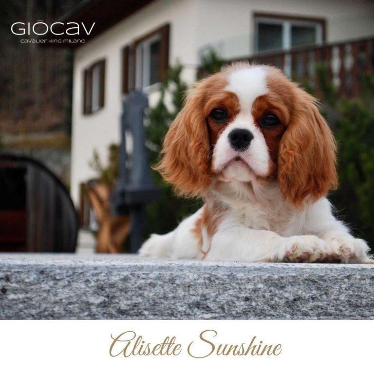 alisette-giocav